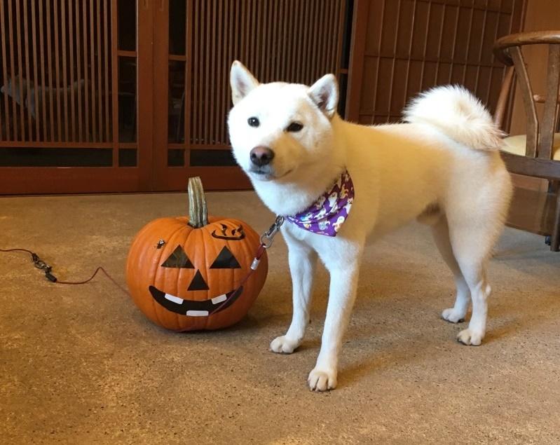 まめとかぼちゃ2017