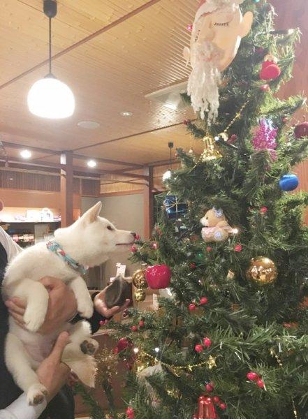 2016 まめクリスマス