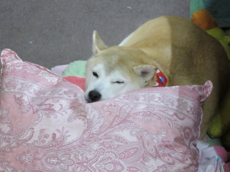 おやすみ舞子