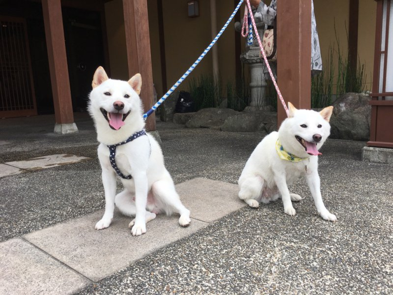 まめ太郎&ゆきちゃん3
