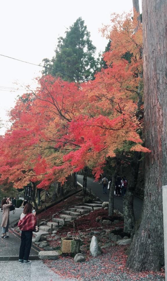 比叡山のもみじが見ごろを迎えています
