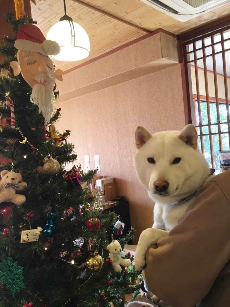 もうすぐクリスマスだね♡
