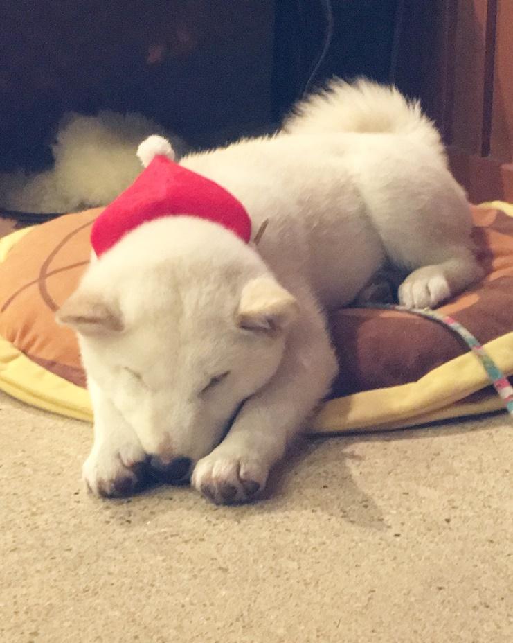 Merry  Christmas★☆★!