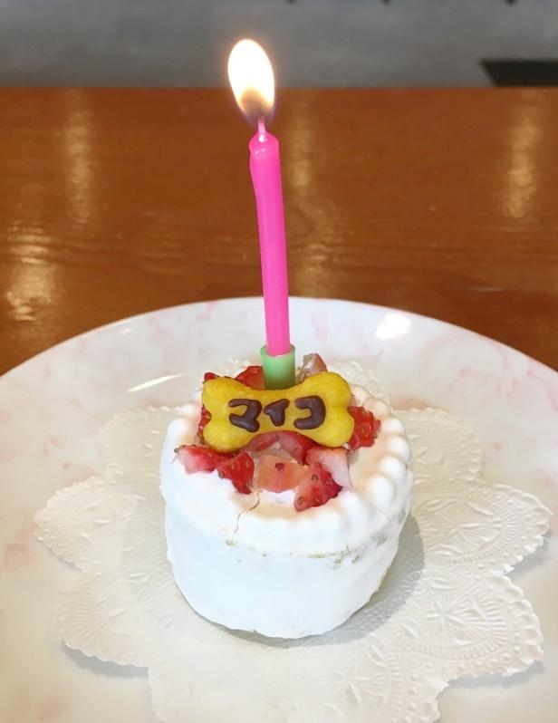 舞子ちゃん10歳おめでとう(^_-)-☆