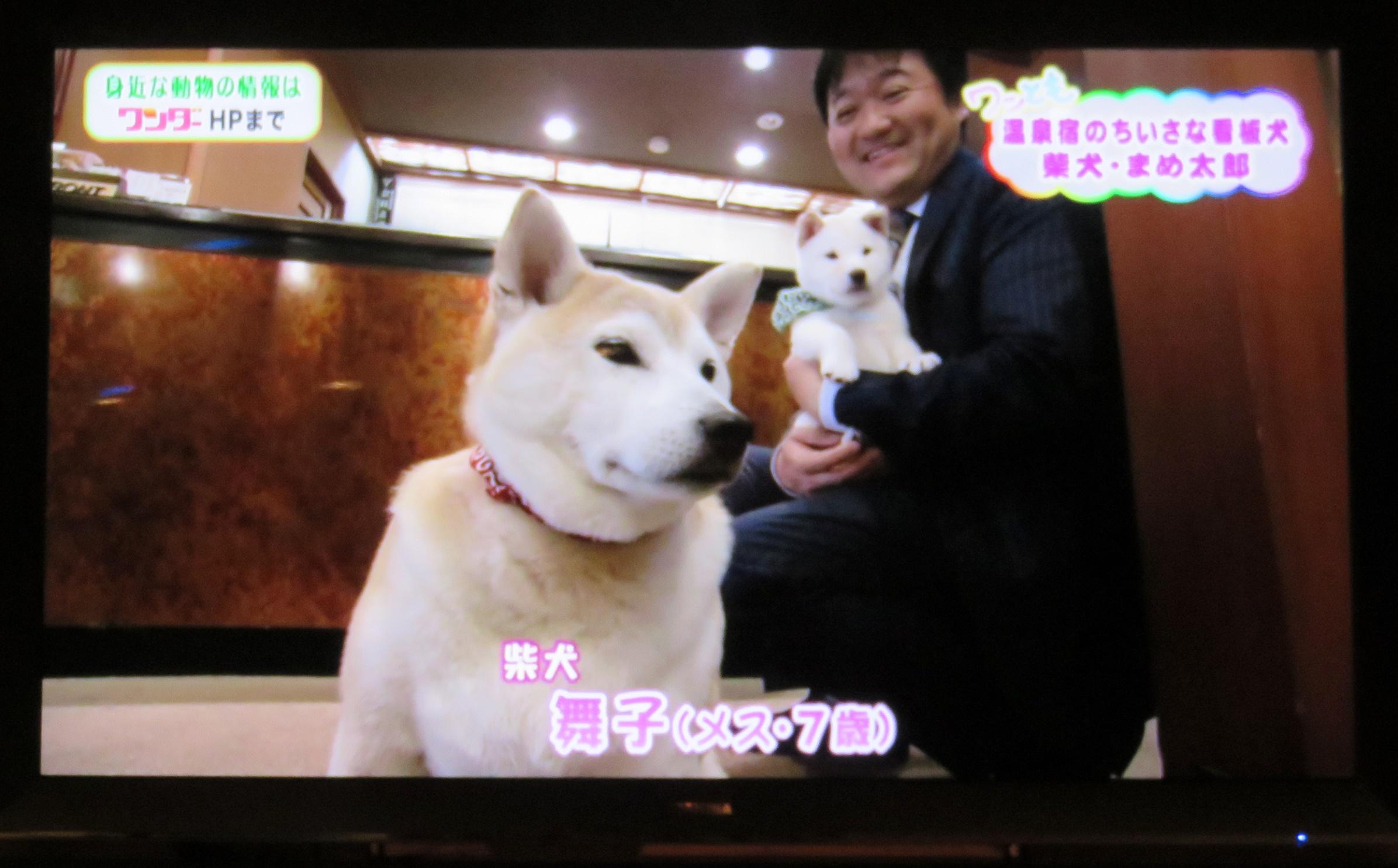 "TVデビュー""温泉宿のちいさな看板犬"""