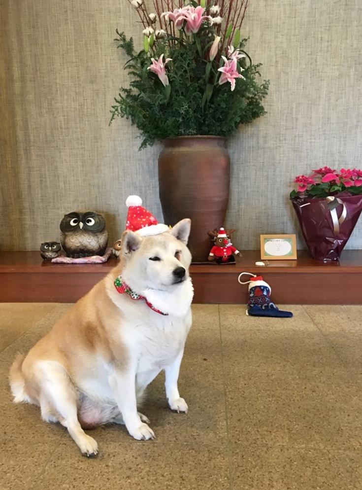 ☆…☆メリークリスマス☆…☆…☆