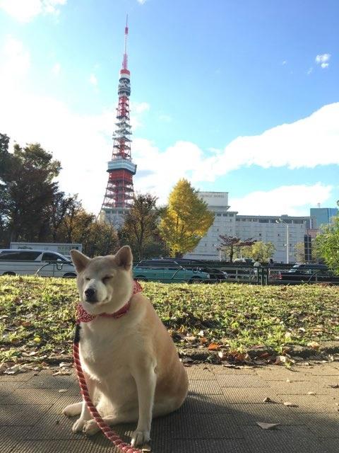 舞子、東京へ行く♪♪