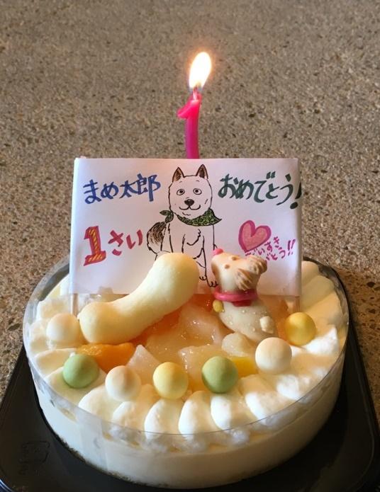 まめ太郎 1歳「ありがとう」